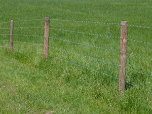 Barbed Wire Strictly Fences